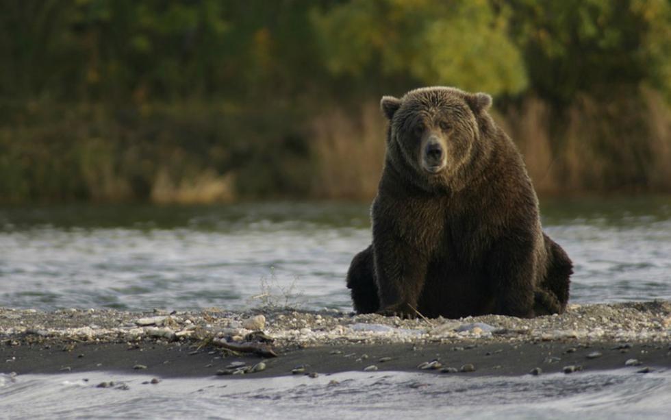 FOTO 1 DE 3 | Rumiko Sasak, de 82 años, retiraba malezas de su jardín cuando se dio cuenta de que un oso negro estaba punto de abalanzarse sobre ella. | Foto: Referencial/Pixabay (Desliza a la izquierda para ver más fotos)