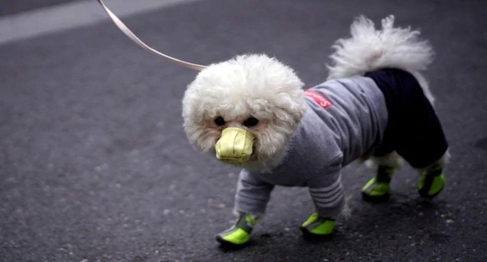 En Hong Kong, un perro resultó  infectado con coronavirus (Foto: Reuters)
