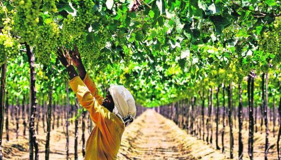 Derogatoria del régimen agrario bajo la lupa del Congreso. (Foto: Difusión)
