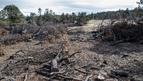 Tala ilegal inunda el mercado de la madera en México
