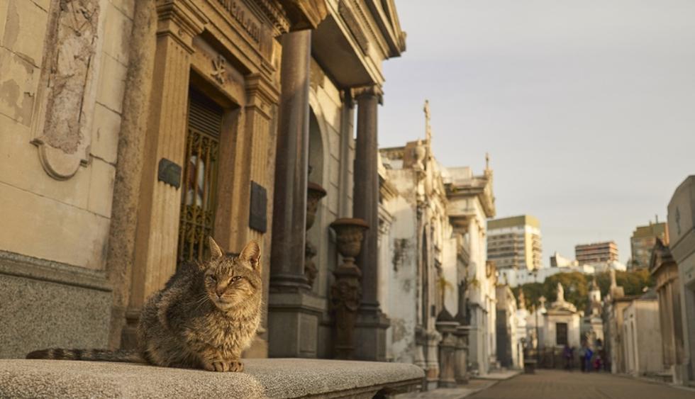 Aquí yacen los restos de destacados personajes de la historia republicana. Y ahora es habitado por gatos asilvestrados. (Foto: Shutterstock)