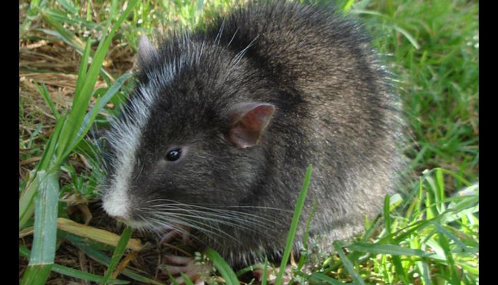 Seis potenciales nuevas especies halladas cerca de Machu Picchu - 7