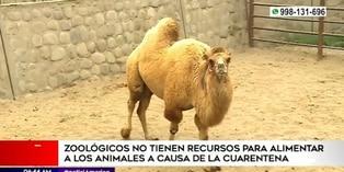 Perú: zoológicos solicitan ayuda para alimentar animales