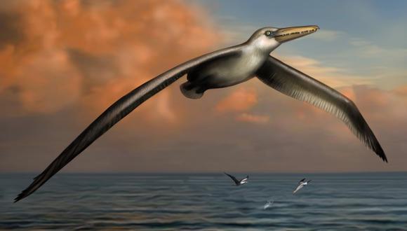 Identifican restos fósiles del ave más grande que haya existido