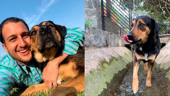 Cuando Mario conoció a Chia en un albergue en Cieneguilla supo que era la perrita ideal para él. (Fotos: cortesía Mario Ferrari)