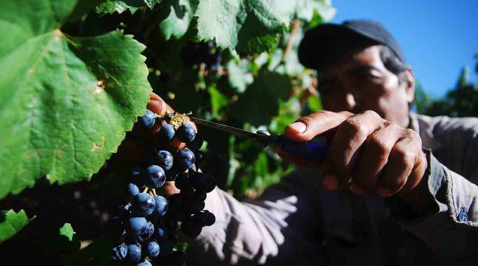 Recorre la otra ruta del vino en estas bodegas en Argentina - 1