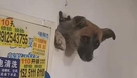 El rescate de un perro que quedó atrapado en una pared al intentar ocultarse del ruido de fuegos artificiales. (Foto: XSW224600 / Douyin)