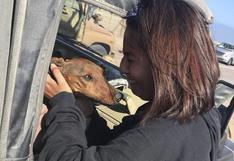Hallan a perro que se había perdido en el desierto de Chile por culpa de aerolínea