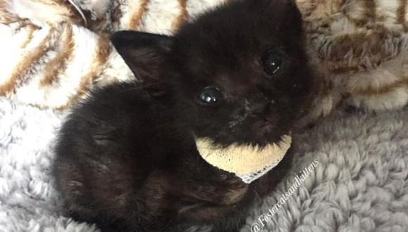 Gatito que fue rescatado de las calles de Las Vegas se volvió popular en Instagram (Foto: @fostercatsandkittens / Instagram)