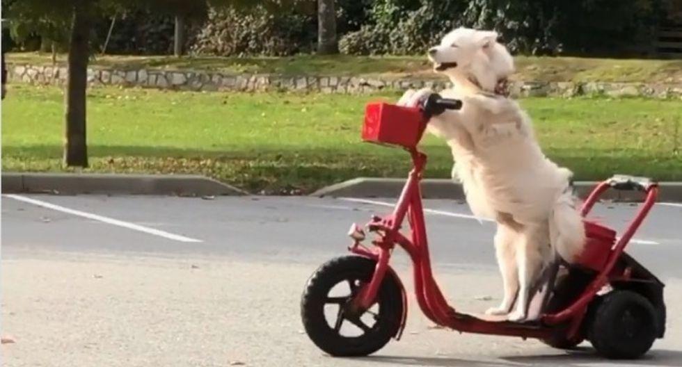 Lili, un can de 8 años, maneja un scooter como toda una profesional en los alrededores de la Escuela Secundaria Carson Graham en Vancouver. Su video se ha hecho viral en Instagram. (Foto: Captura de pantalla)