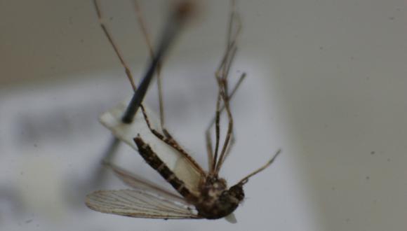 El Caribe busca estrategia contra la chikungunya