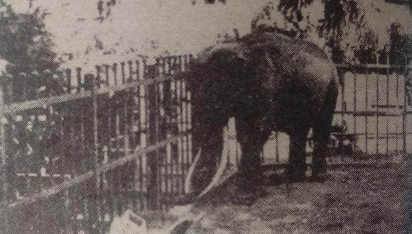 La figura apacible del elefante 'Charles' puede ser engañosa, ya que en 1912 mató a un guardián del antiguo parque zoológico de la Exposición en Lima.  (Foto: GEC Archivo Histórico)