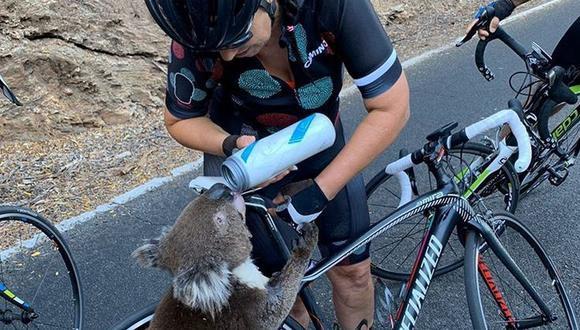 Un koala recibe agua de un ciclista durante una fuerte ola de calor que azotó la región, en Adelaida, Australia del Sur, Australia. (Foto: Reuters).