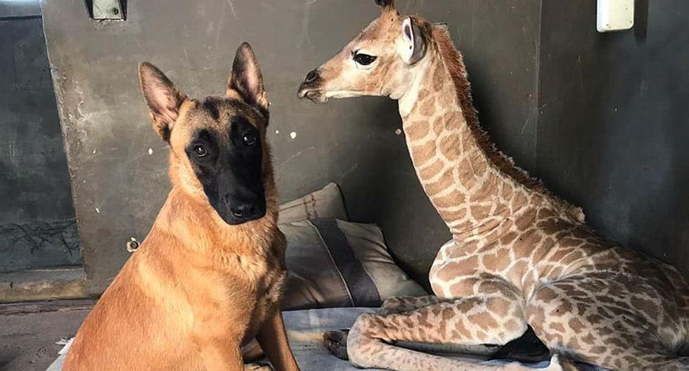 Durante el tiempo en que 'Jazz' vivió solo recibió cariño y compañía de su fiel amigo 'Hunter'. (Foto: captura Facebook)