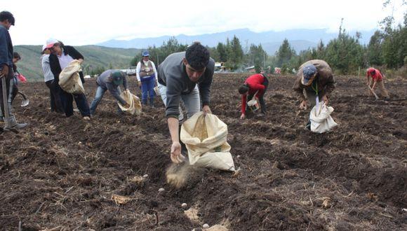 El subsector agrícola creció 2,4% en los primeros cinco meses del año. (Foto: GEC)