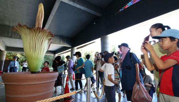 Parque botánico japonés exhibe la flor más grande del mundo