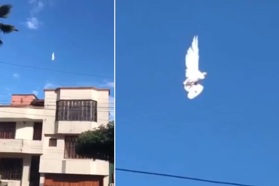 Foto 1 de 3 | El ave sorprendió a todos al 'levitar' en plena calle. | Crédito: @ChumelTorres en Twitter. (Desliza hacia la izquierda para ver más fotos)