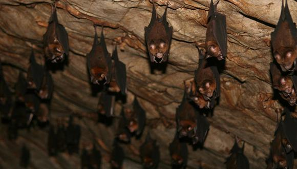 Murciélagos en su refugio. Foto: Rhett A. Butler.