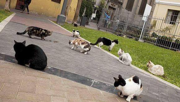 Miraflores: Trasladan a gatos del parque Kennedy a un albergue