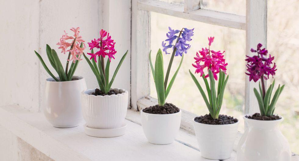 Para que las flores de tu casa luzcan frescas, agrega una mezcla de 3 cucharadas de azúcar y 2 de vinagre en el agua del florero. (Foto: Shutterstock)