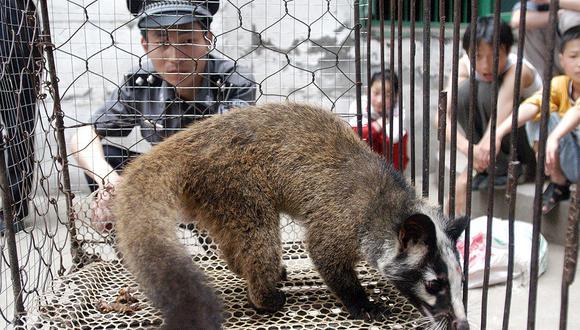 Policía vigila un gato civeta capturado en la naturaleza por un granjero en Wuhan. Autoridades de China prohíben la venta de animales salvajes hasta que culmine la epidemia. (Foto: AFP)