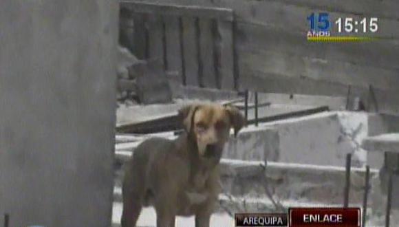Yanahuara: más de 10 perros fueron rescatados de casa