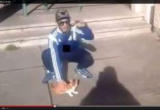 Francés es condenado a un año de cárcel por maltratar a un gato