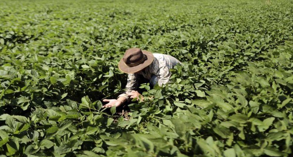 ONU crea plataforma digital dirigida a agricultores familiares