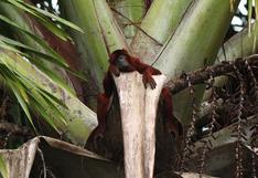Turismo: adultos mayores ahora también podrán disfrutar de la Reserva Nacional de Tambopata | FOTOS Y VIDEO