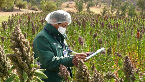 En 2015, Perú inició las gestiones de acceso de quinua grano a Colombia. (Foto: Senasa)