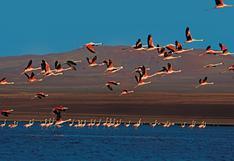 Cuarentena: ¿qué áreas naturales protegidas permanecerán cerradas hasta el 28 de febrero?