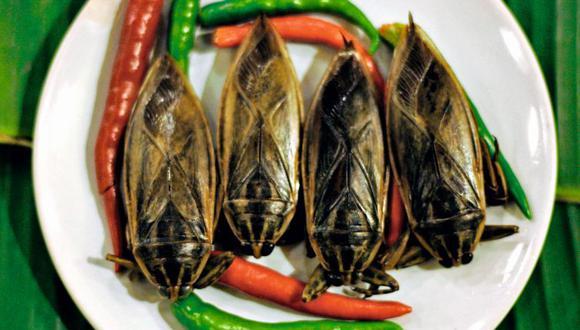 Uno de los platos preparados en un restaurante tailandés está hecho con insectos de agua.
