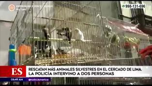 Centro de Lima: rescatan a más de100 animales silvestres que iban a ser vendidos ilegalmente
