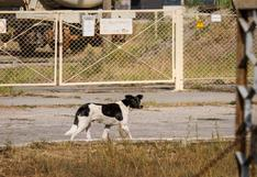 Los perros de Chernóbil: un tour virtual por la zona de exclusión ucraniana