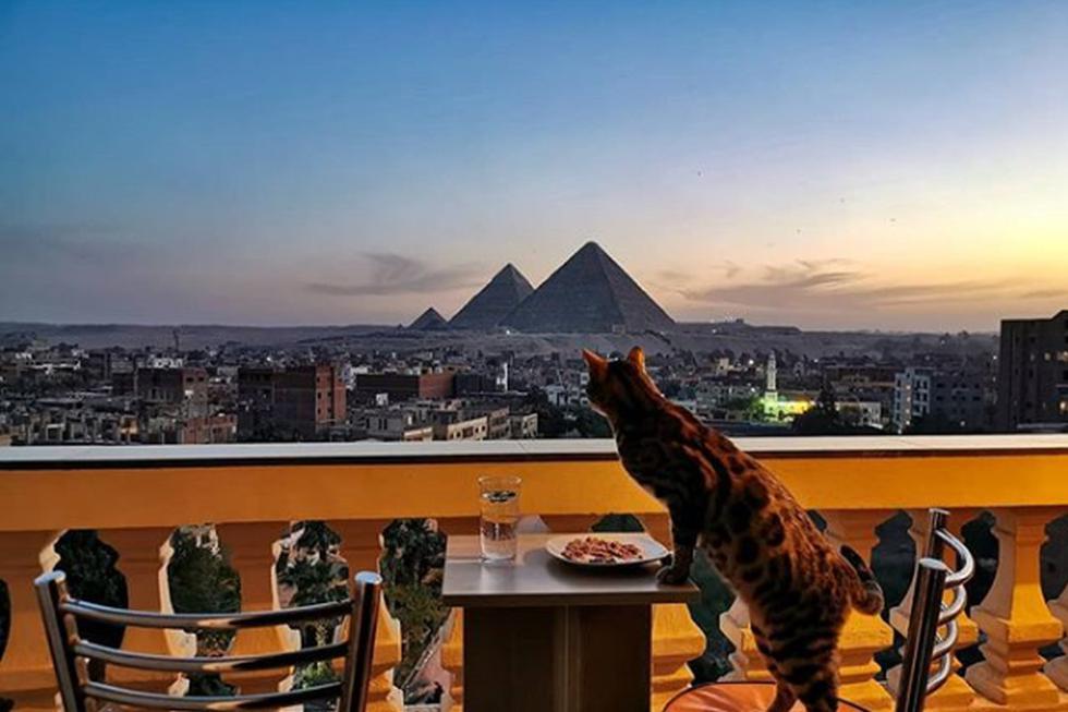 El gato, mientras come en el balcón de su dueño, disfruta de la vista. (Instagram: @bengalyoshi)
