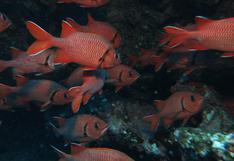 Día internacional de los parques nacionales: la urgencia de proteger más áreas terrestres y marinas