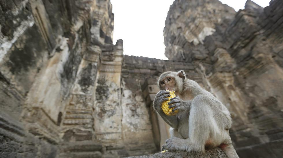 En el Templo Phra Prang Sam Yod se celebra el festival del mono - 1