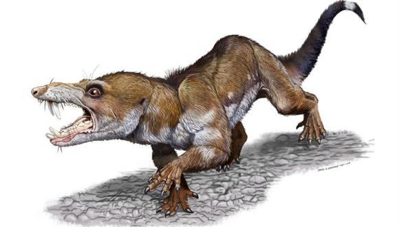 Más de 230 millones de años tuvo que esperar este roedor para ser descubierto en las rocas multicolores del famoso yacimiento Ischigualasto. (Foto: La Nación de Argentina / GDA)