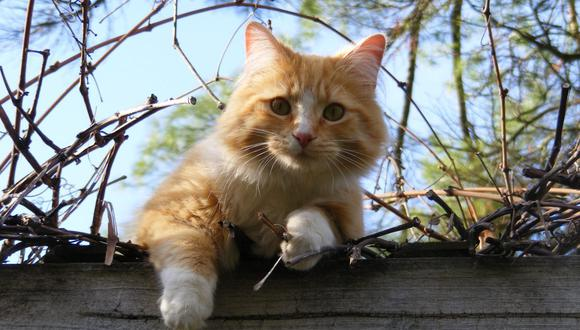 Si el gato tiene la posibilidad de salir al exterior en una zona como un patio o jardín, también debemos darle sombra y agua. (Foto: Pexels)