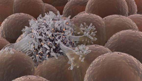 Algunas células se vuelven sordas a las señales de control de nuestro organismo y comienzan a dividirse de forma descontrolada.
