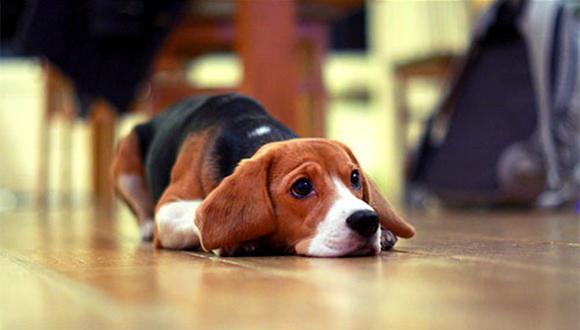 Que no te sorprenda si los primeros días tu perro se ubica cerca de la puerta de la casa en posición de espera. Felizmente hay formas de sacarlo de ese estado. (Foto: Flickr)