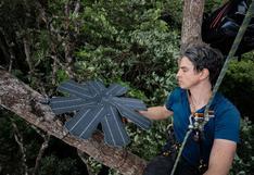 Crean un sistema de monitoreo de bosques con viejos modelos de celulares y paneles solares