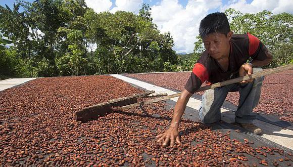 Gracias al incremento de cultivo, el Perú ingresó a la lista de los diez mayores productores de cacao. (Foto: Archivo El Comercio)