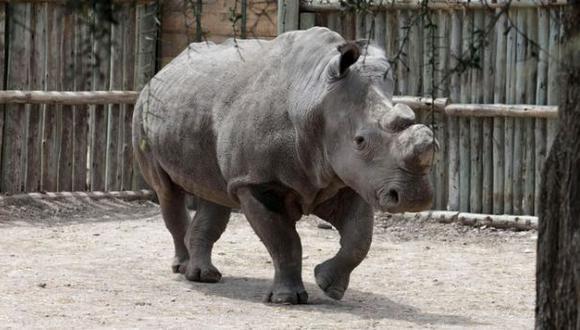 Con la muerte de Suni, sólo quedan seis rinocerontes blancos del norte. (Foto: Reuters)