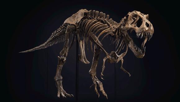 Con el método usado por el equipo de Charles Marshall para saber cuántos Tiranosaurios rex existieron, es posible calcular la población de otras especies extintas. (Foto de archivo: EFE/Christie's )