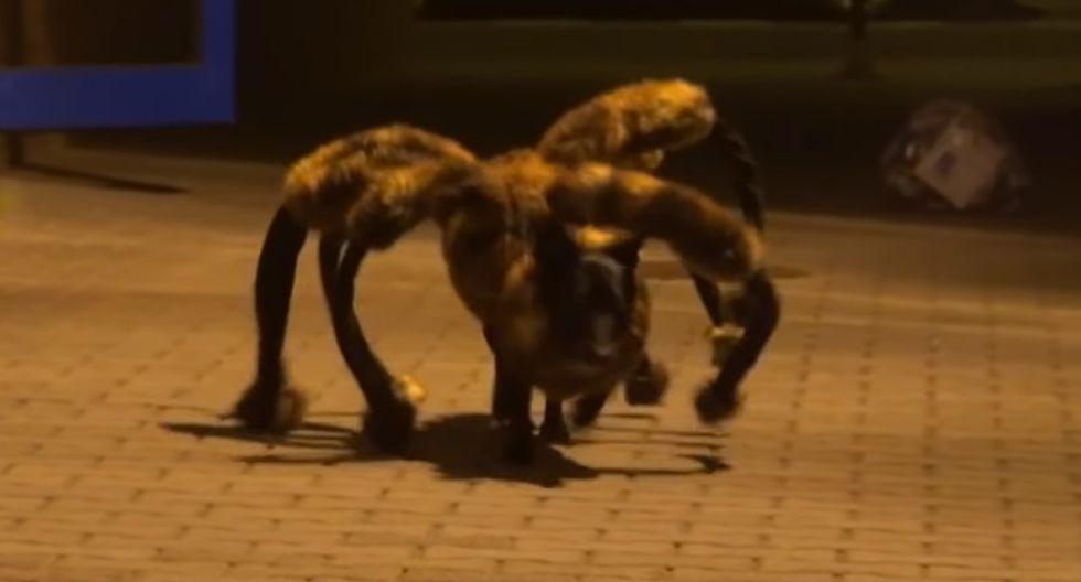 Este perro disfrazado de una 'araña gigante mutante' se hizo viral luego de que asuste a miles de personas y su video llegue a un total de 179 millones de reproducciones. (Foto: Yt)