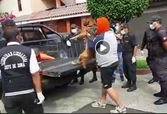 San Miguel: municipio confirma que dejará que vecinos saquen a sus perros para sus necesidades
