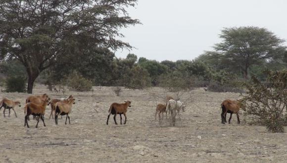 Compuertas de Olmos serán abiertas para combatir la sequía