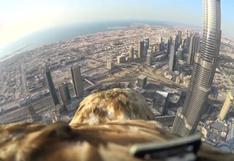 El vuelo de un águila desde el rascacielos más alto del mundo