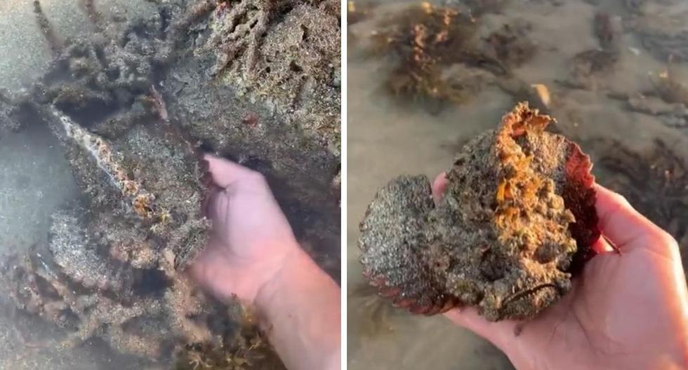 El pez piedra es uno de los más letales del planeta. (Foto: @jeffreycoleman02 | TikTok)